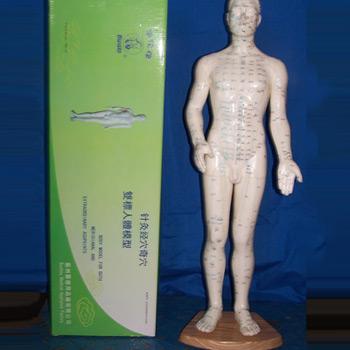 华佗针灸人体模型50cm