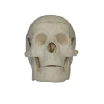 儿童头颅骨模型KAR/1114