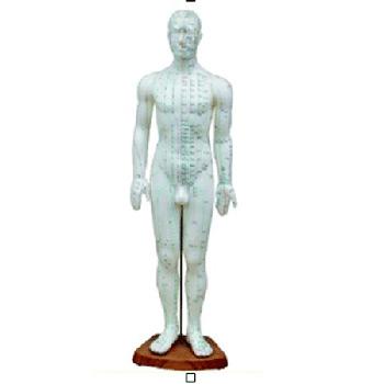 人體針灸模型50cm
