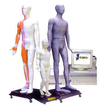 康人多媒體人體針灸穴位發光模型MAW-100E