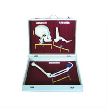 人体骨杠杆分类模型KAR/11211