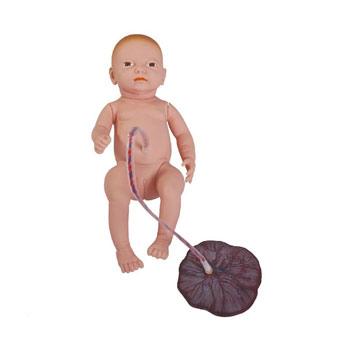高级新生儿脐带胎盘护理模型KAR/132