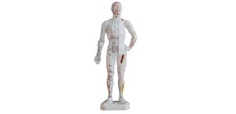 人体针灸模型26cm