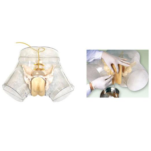 高级透明女性导尿模型KAS-F2